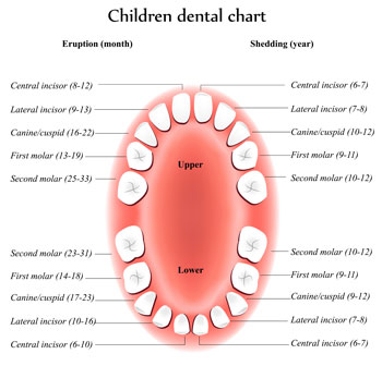 Dental Topics - Pediatric Dentist in Southampton, NY